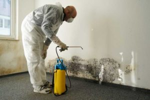Mold Damage Restoration Services in San Diego, CA | D-Mac Restoration Inc