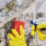 Mould removal gives your home a cleaner, healthier look D-mac Restoration
